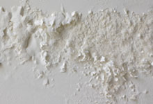 Newhaven drywall mold removal